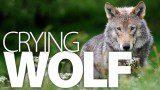 500x_wolf_splash_new
