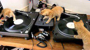 kittens-deejay