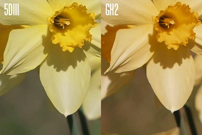 Comparativo entre GH2 e 5D Mark III.