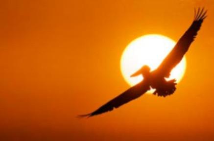 Pássaro humano.