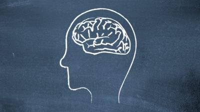 Cérebro desenhado na lousa.