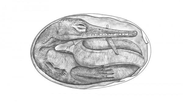 Feto fossilizado do mesossauro.