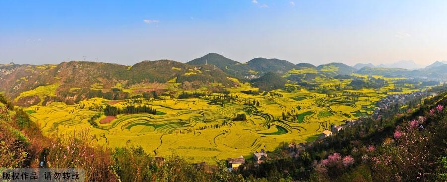 Canola em província Chinesa.