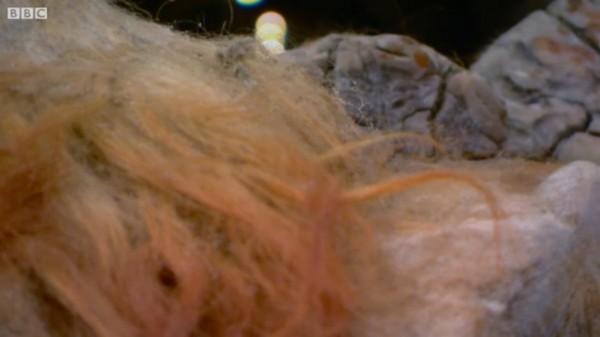 Pelos do Mamute.