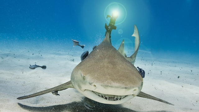 Shark with lasers.