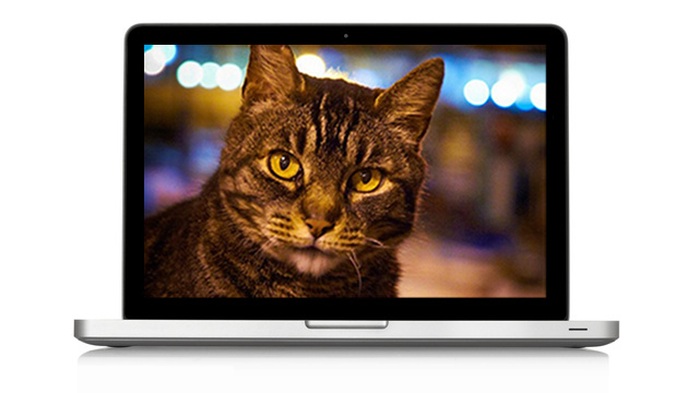 Cérebro artificial do Google adora ver vídeos de gatinhos