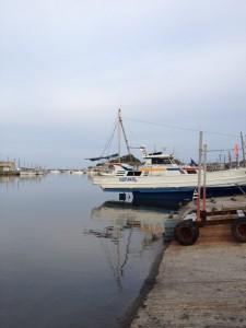 Porto em Isumi, sem as sardinhas mortas