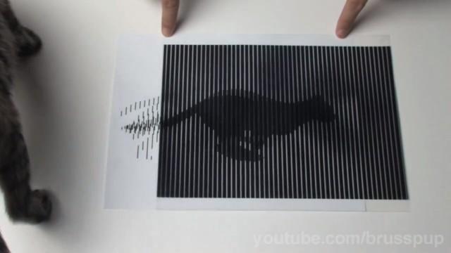 Ilusão de ótica felina.