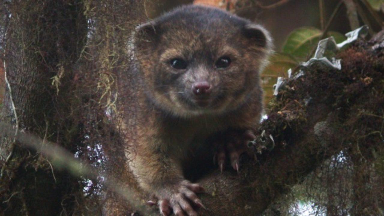 Uma nova espécie de mamífero foi descoberta (e é adorável)