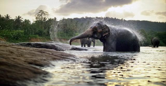 Elefante com a RED Dragon
