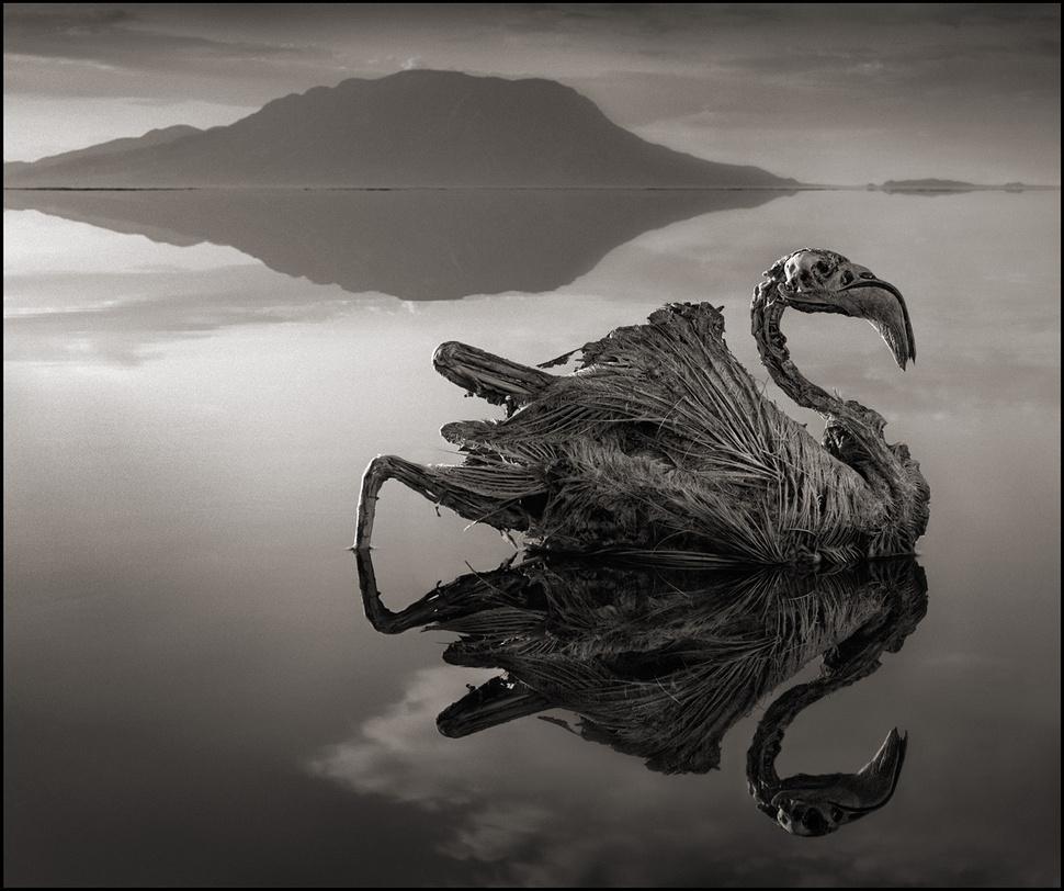 Qualquer animal que toca este lago mortífero se transforma em pedra