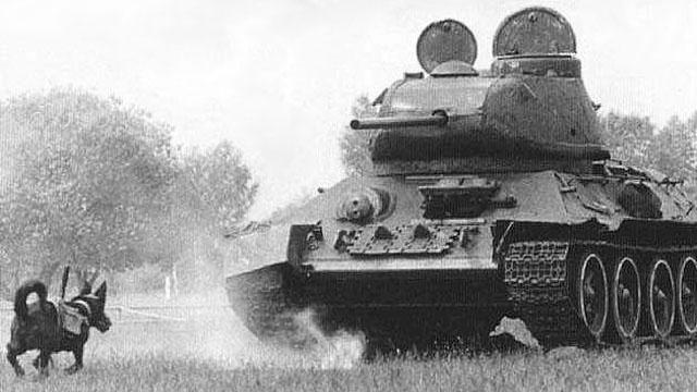 Cachorros explosivos foram usados para combater tanques na Segunda Guerra Mundial