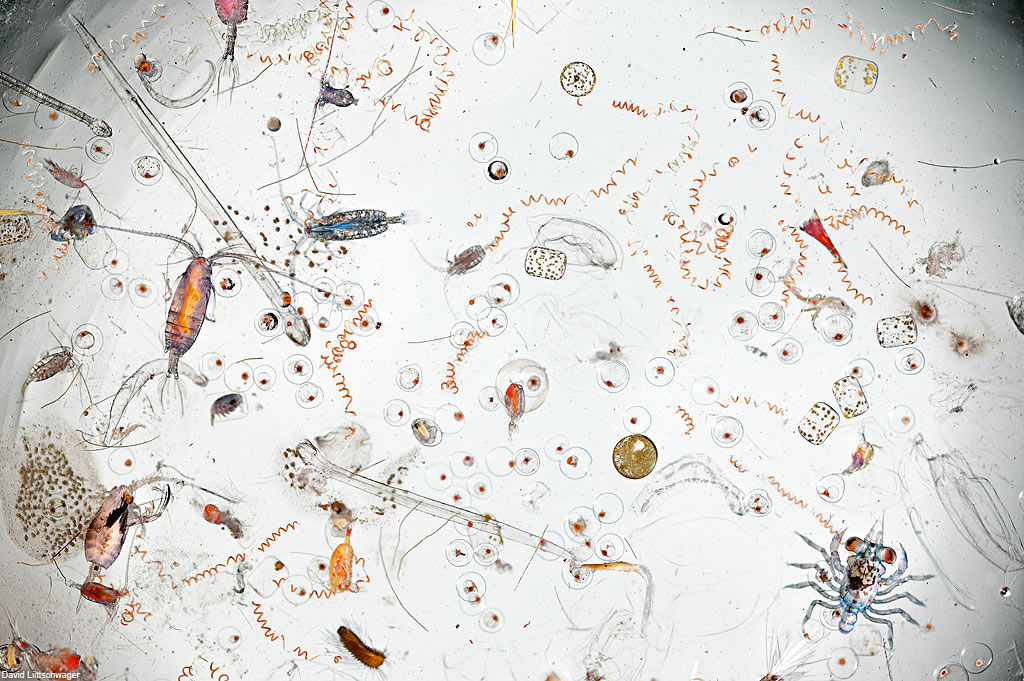 scoop-of-water-magnified