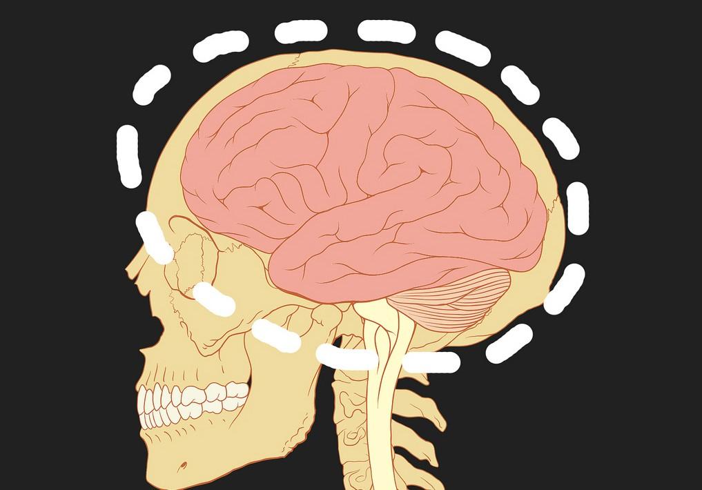 cerebro_corte