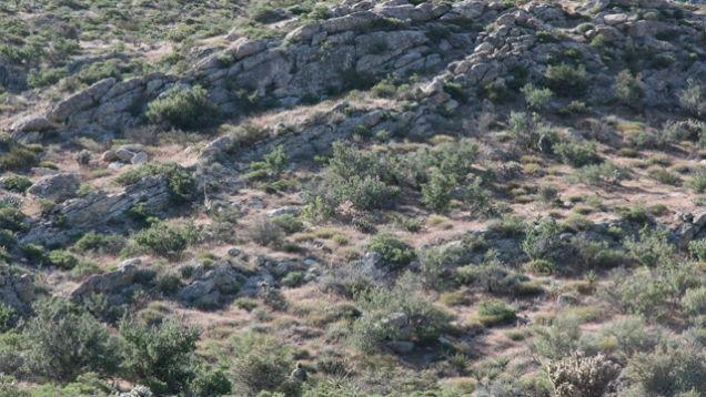historia camuflagem (6)