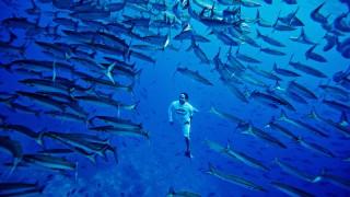 Orlando Duque on Malpelo island