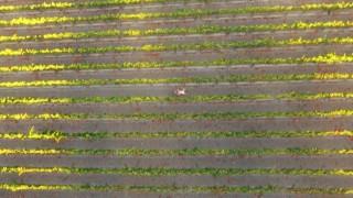Drone Boning (3)