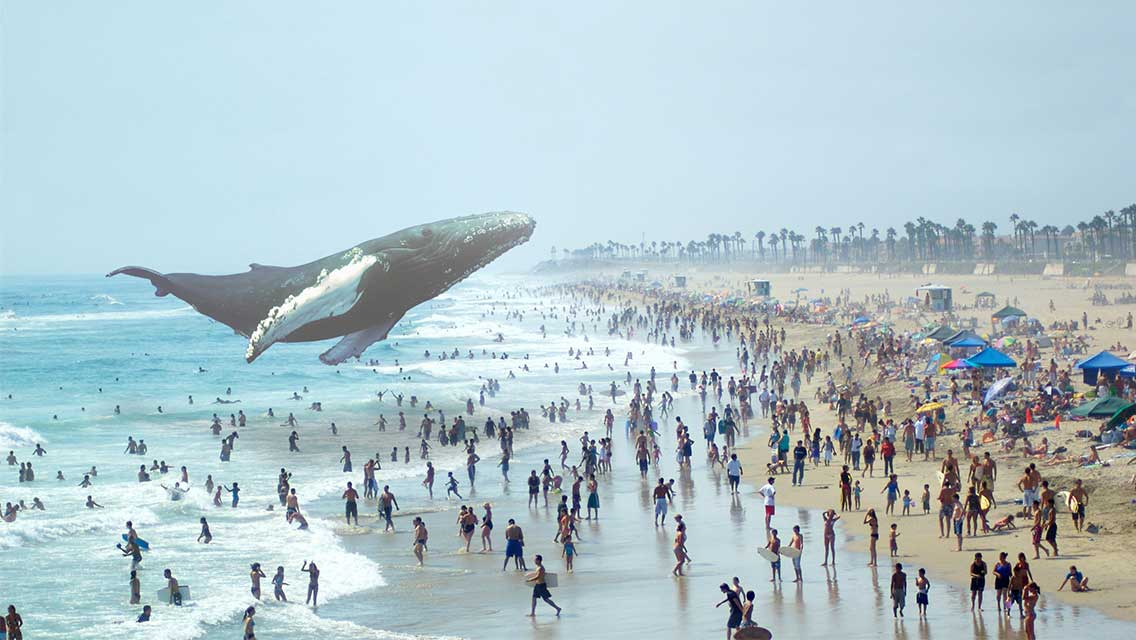Baleia virtual com Magic Leap