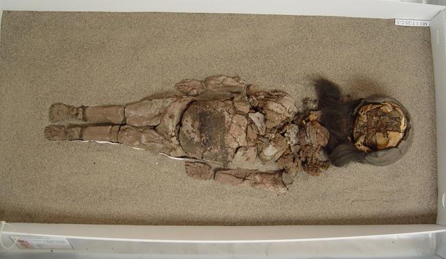 Mumia Chinchorro (1)