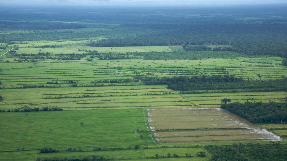 Estudante brasileira desenvolveu um método para reduzir o consumo de água na agricultura