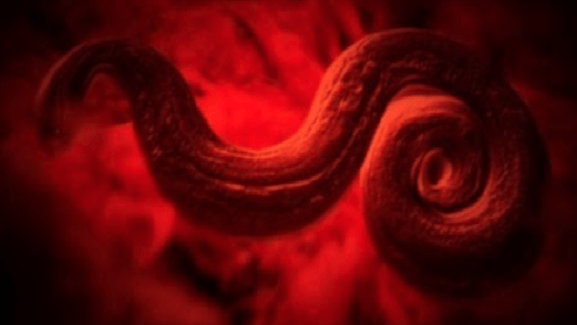 Cinco parasitas letais que cruzaram o mundo