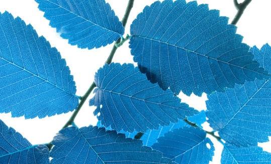 A saga para reinventar a fotossíntese ficou mais colorida