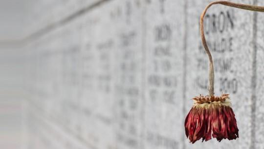 Morte em flor