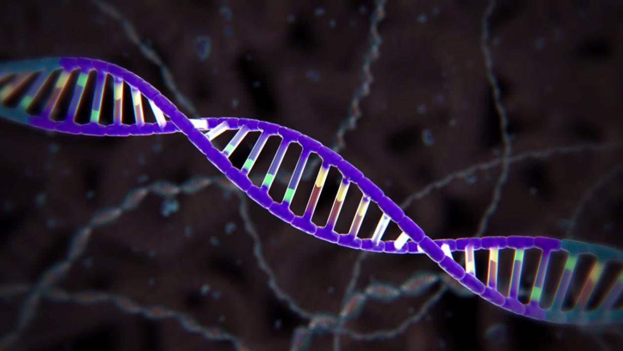 Tudo o que você precisa saber sobre a CRISPR, nova ferramenta de edição de DNA