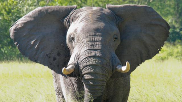 Ajude cientistas a monitorar animais em Moçambique direto da sua casa
