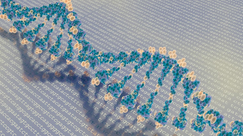 DNA e bases