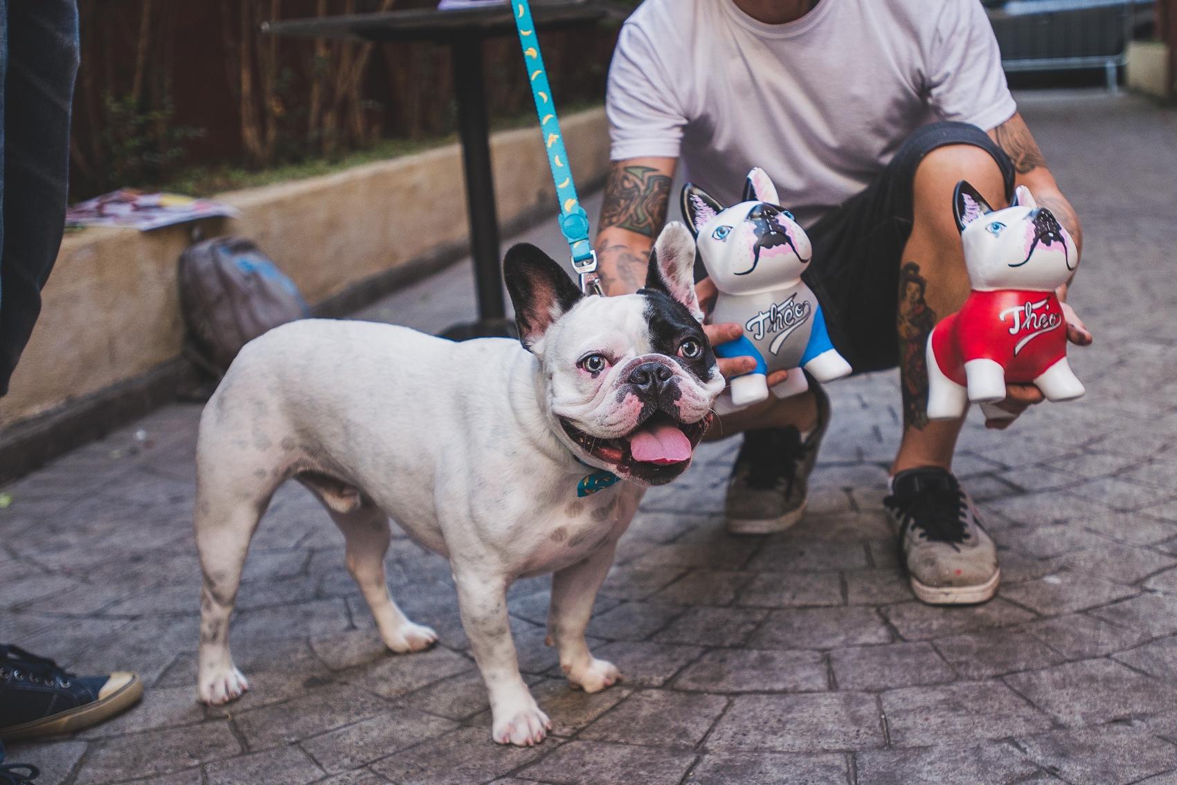festa-dog-bob-golden-48