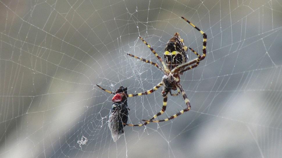 Cientistas analisaram o DNA das teias de aranha e os resultados são assustadores