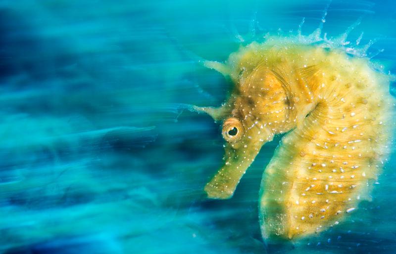 Estas imagens de um concurso de fotografia submarina são deslumbrantes