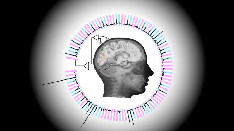 Nova técnica permite a cientistas ler mentes com velocidade próxima à do pensamento
