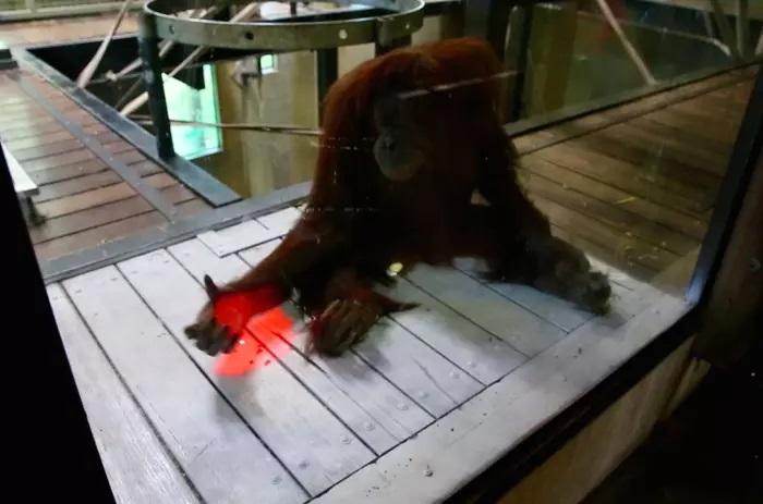 orangotango-jogo-2