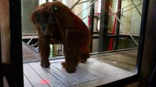 orangotango-jogo