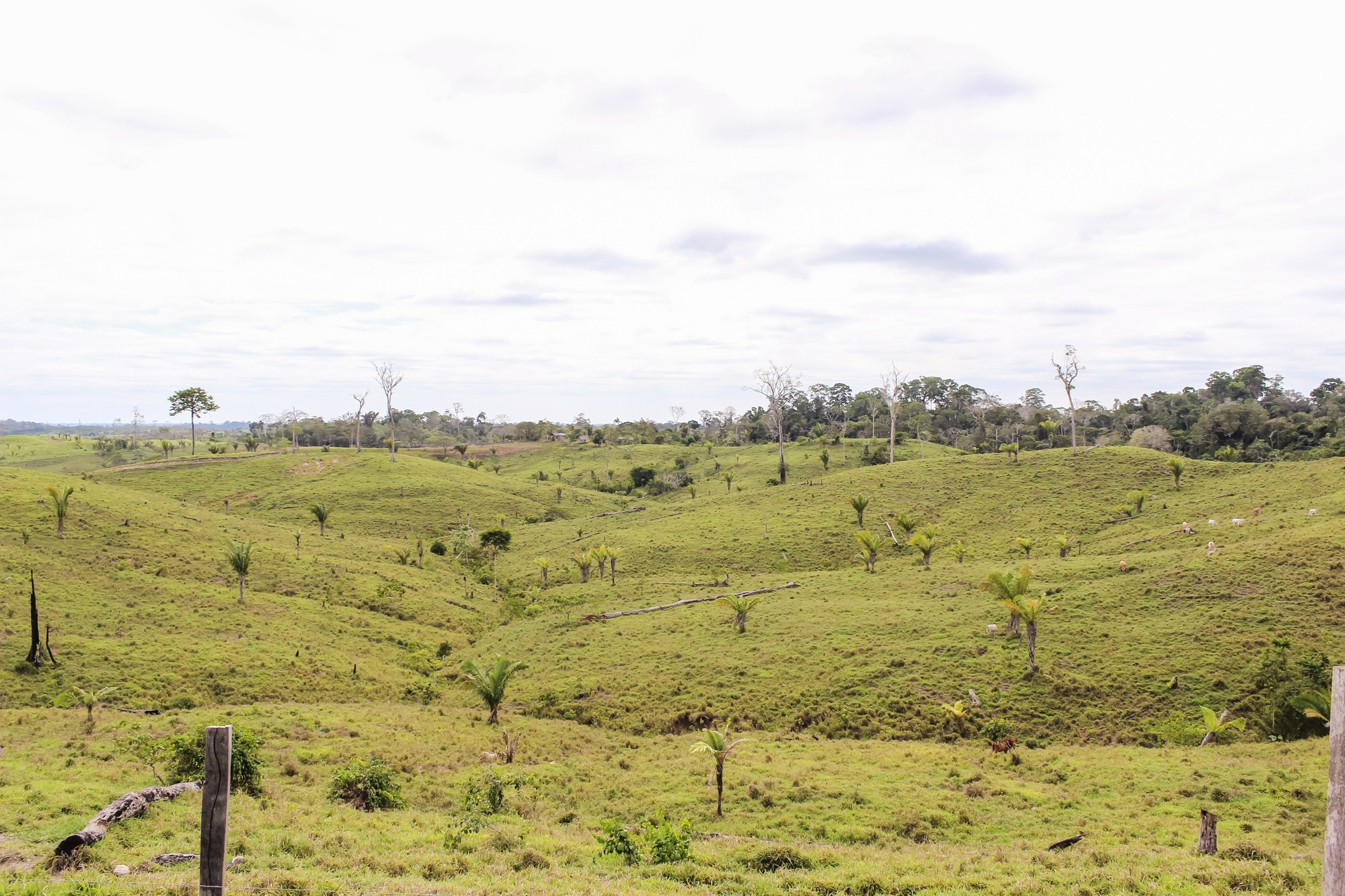 rio ebulicao amazonia (4)