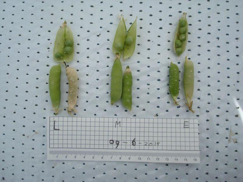 comparativo-ervilhas