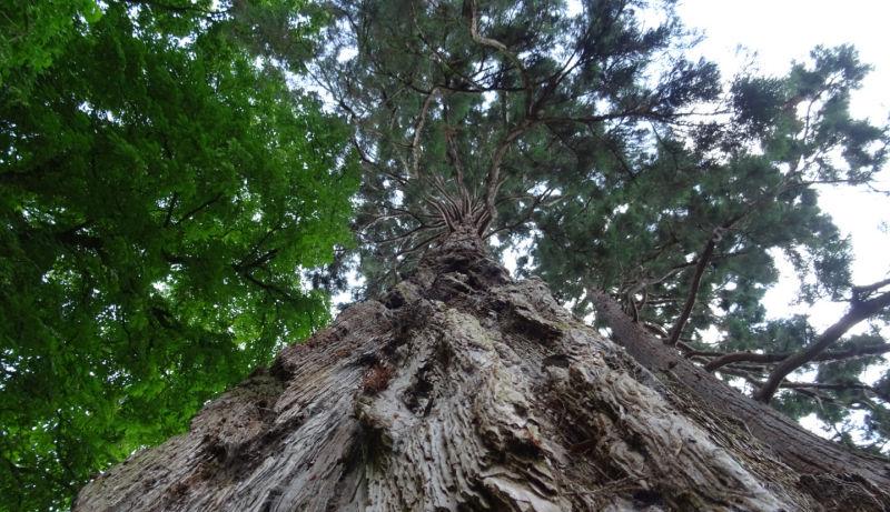 As árvores são ainda mais incríveis do que pensávamos