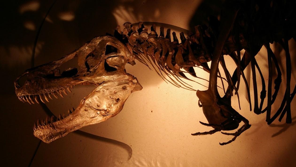 Cientistas podem estar totalmente errados sobre a extinção dos dinossauros