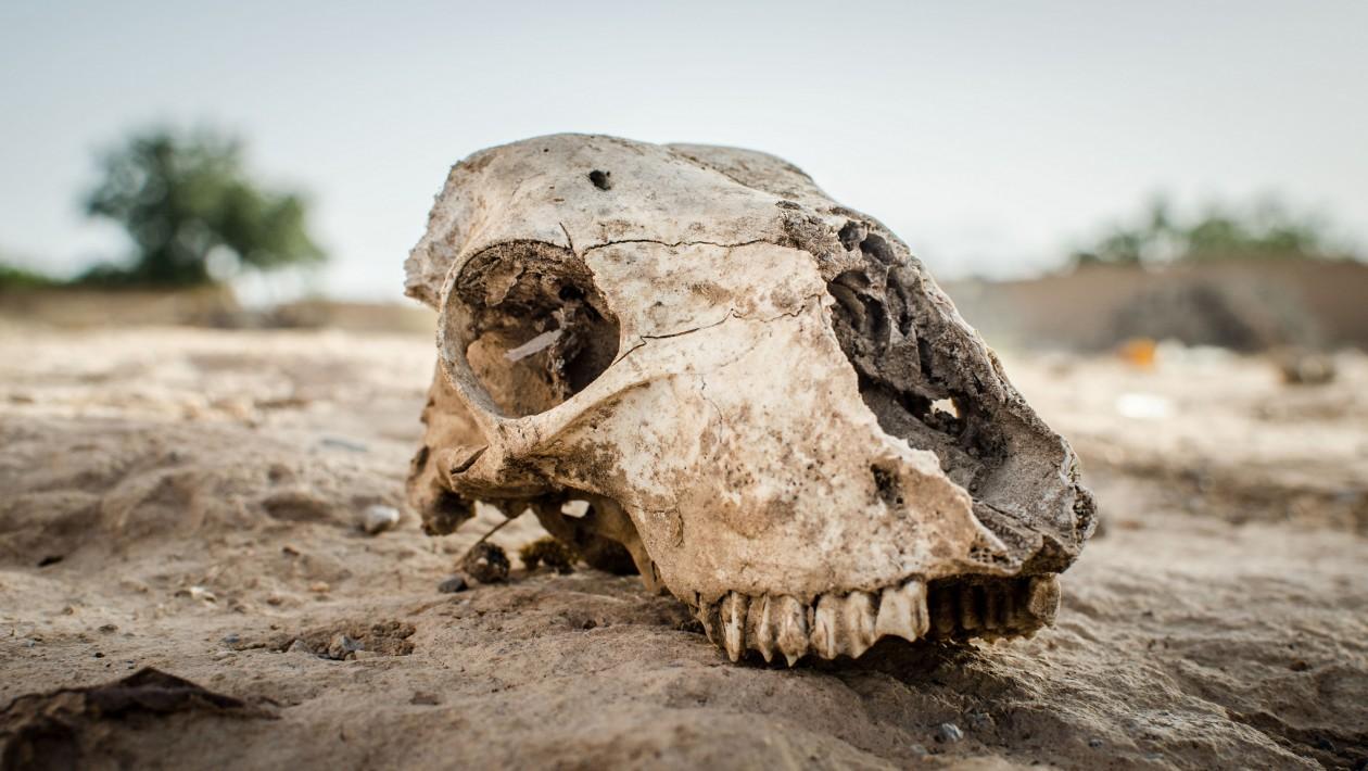 A Terra de 56 milhões de anos atrás nos mostra o futuro da mudança climática