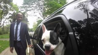 uberpet cachorro 3