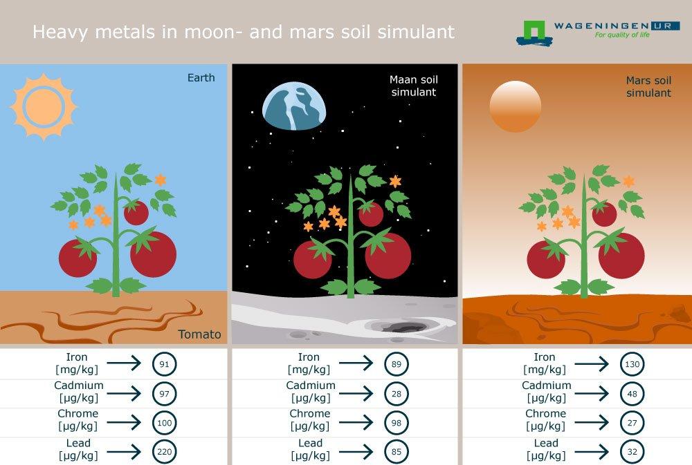 plantas marte (3)