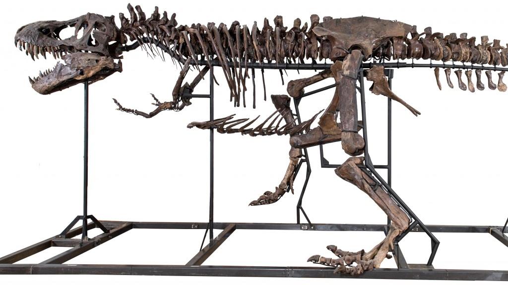 tiranossauro a venda (1)
