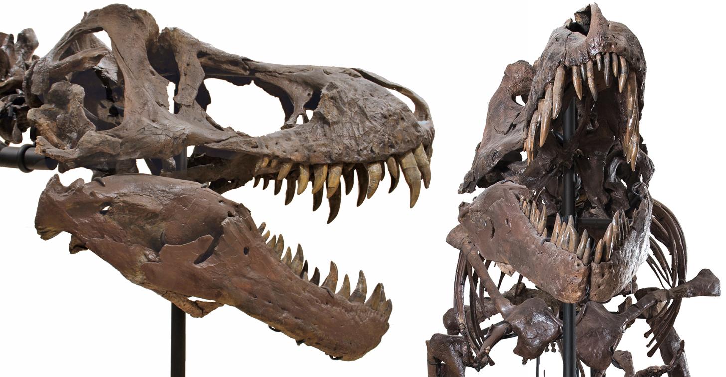 tiranossauro a venda (2)