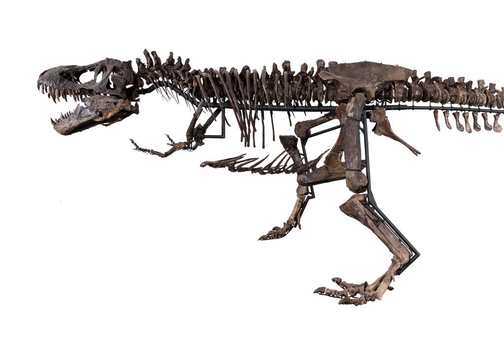 tiranossauro a venda (4)