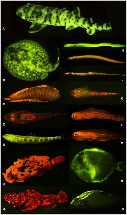 biofluorescencia