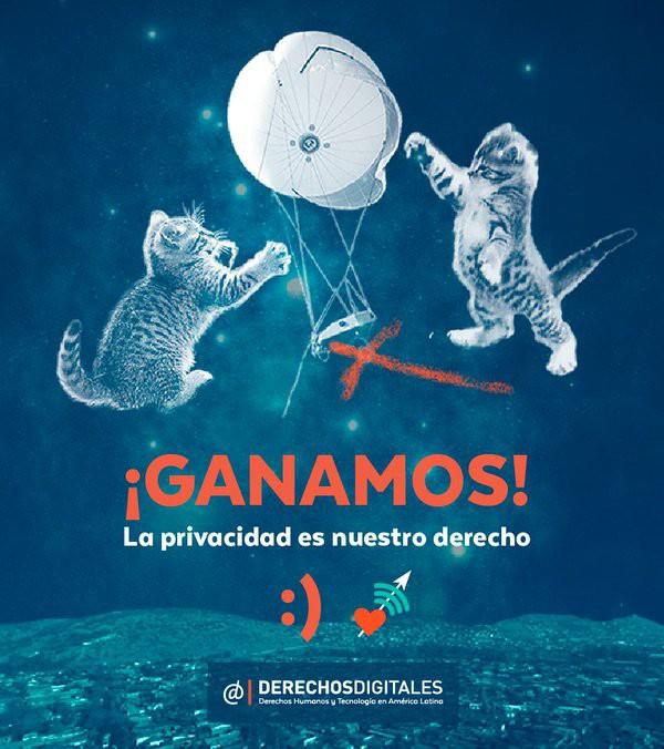 derechos-gato
