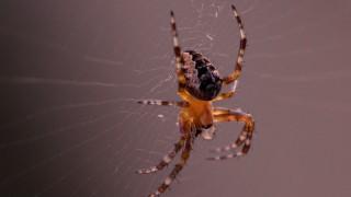 garden-spider-1574519_1920