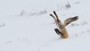 As melhores fotos finalistas do Comedy Wildlife Photography Awards 2016